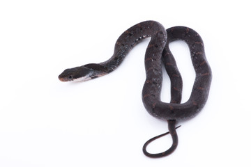 Snake in nature on white background