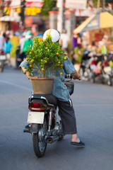 Vietnamese motorcyclist with kumquat tree
