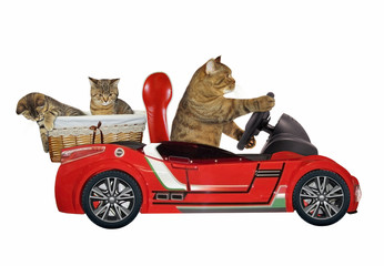 The cat in a red car carries a wicker basket with two kittens. White background.
