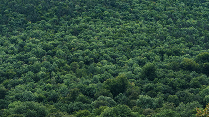 Forest Vegetation Texture, Green Trees View from above Wall mural