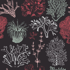 Seamless pattern with hand drawn seaweeds, corals , shells sketch. Vector background with underwater natural elements. Vintage sealife illustration.