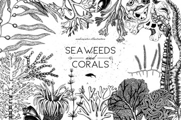 Vector frame with hand drawn sea corals, fish, stars sketch. Vintage background with underwater natural elements. Decorative sealife illustration isolated on white. Wedding design. Wall mural