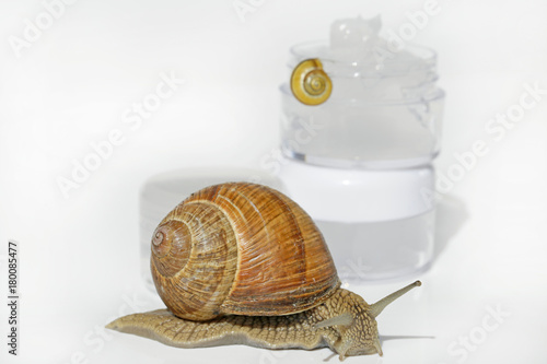 snail slime cream. snail mucus extract. Gel with extract of a snail ...