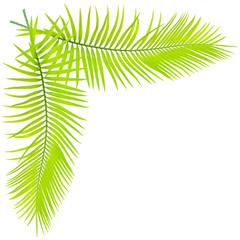 feuilles de palmier sagoutier en angle, fond blanc