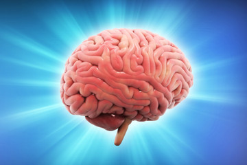 3d rendered Human Brain isolated on color background