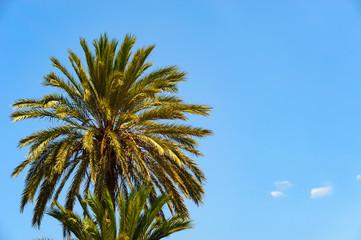 Palme vor blauem Himmel