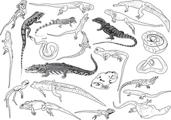 set of reptiles outlines isolated on white
