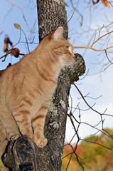 Orange Tabby Cat in Tree