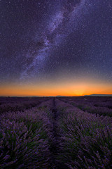 Lavender field at night in Provence, amazing landscape with starry sky, milky way and glow of sunrise, France, vertical image