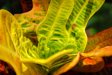 exotic plant / leaves with psychedelic colors close-up - abstract image