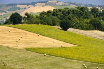Landscape near Sant'Elpidio a Mare (Marches, italy)