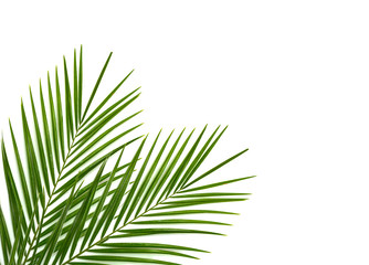 Wall Murals Palm tree Tropical palm leaf on a white background
