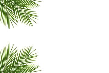 Tropical palm leaf on a white background