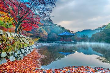 Autumn in Naejangsan Park,korea.