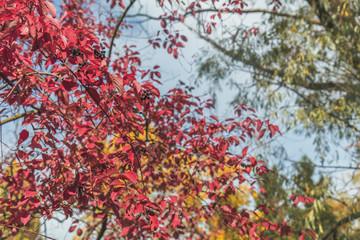 Autumn magic in the city park