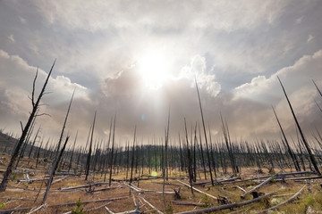 Destruction of entire forest due to high temperature caused by global warming climate change