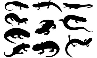Salamander Silhouette Vector Graphics