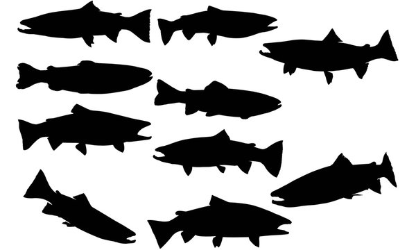 Steelhead trout Silhouette Vector Graphics