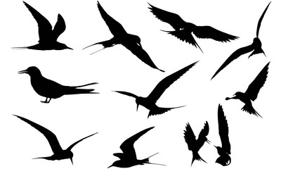 Tern Silhouette Vector Graphics