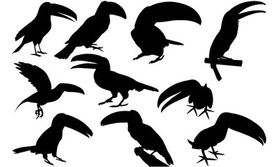 Toucan Silhouette Vector Graphics