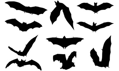 Vampire bat Silhouette Vector Graphics