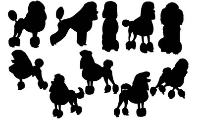 Poodle Dog Silhouette Vector Graphics