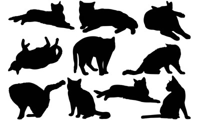 American Shorthair Cat Silhouette Vector Graphics