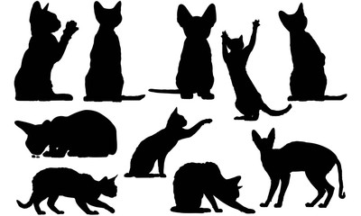 Devon Rex Cat Silhouette Vector Graphics