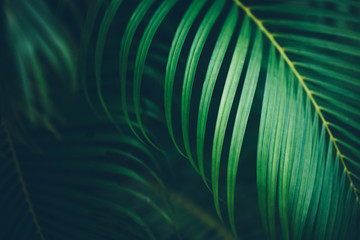 Palm leaf background. Fotoväggar