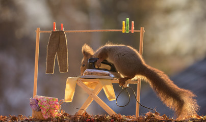 squirrel stands on a Ironing Board