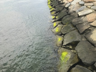 stones on the waterfront with green moss.