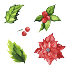 Se of christmas winter leaves, berries and flowers isolated on white background. Hand drawn watercolor illustration.