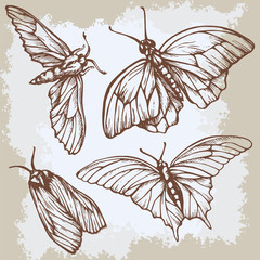 Vintage beige background with butterflies. Elegant elements for design, can be used wallpaper, decoration bags clothes. Hand drawn contour lines strokes.