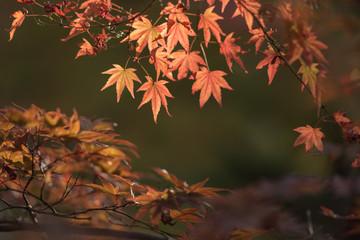 Autumn scenery of a Japanese garden
