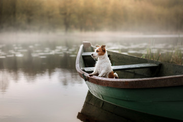 Dog Jack Russell Terrier in a boat