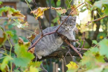 Gray cat on tree