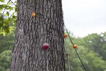 fishing poles at the ready