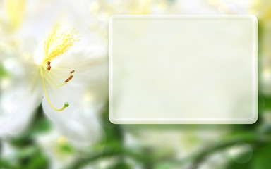 Mock up template with white azalea, light box and blurred bokeh floral background. Spring, summer frame for scrapbook, greeting cards, postcards, posters, flyers, presentations. Clipping path