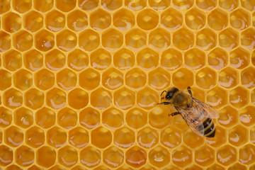 Ape operaia sul favo colmo di miele