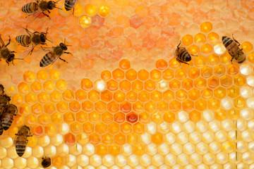 Le api sul favo di miele