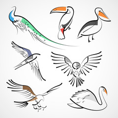 Animals, species of birds: peacock, toucan, pelican, swallow, owl, hawk, falcon, eagle, swan. Isolated on white background. Design of vector illustration.