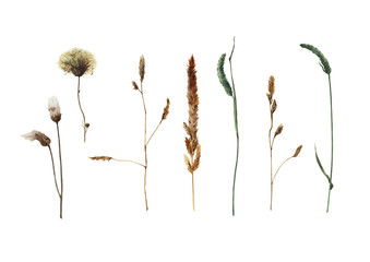 Set of watercolor field plants isolated on white background. Hand drawn illustration. Summer grass. Botanical painting.