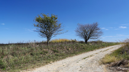 Two trees at the side of a lonely gravel road