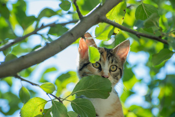 Curious cat in a tree
