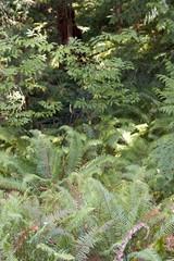 Ferns Everywhere