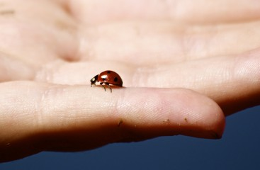 Lady Bug in Hand