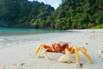 crab on beach. Red crab.travel at the beach. relax time . summer time