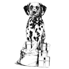 Dalmatians gift sketch vector graphics monochrome black-and-white drawing