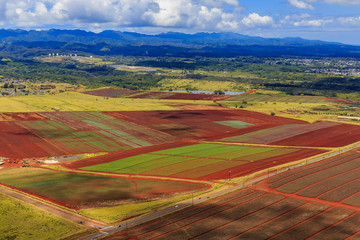 Aerial view of pineapple fields and palm trees in Oahu Hawaii