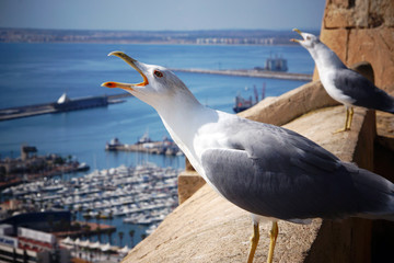 Two seagulls scream, raising their heads on the edge of the fortress by the sea